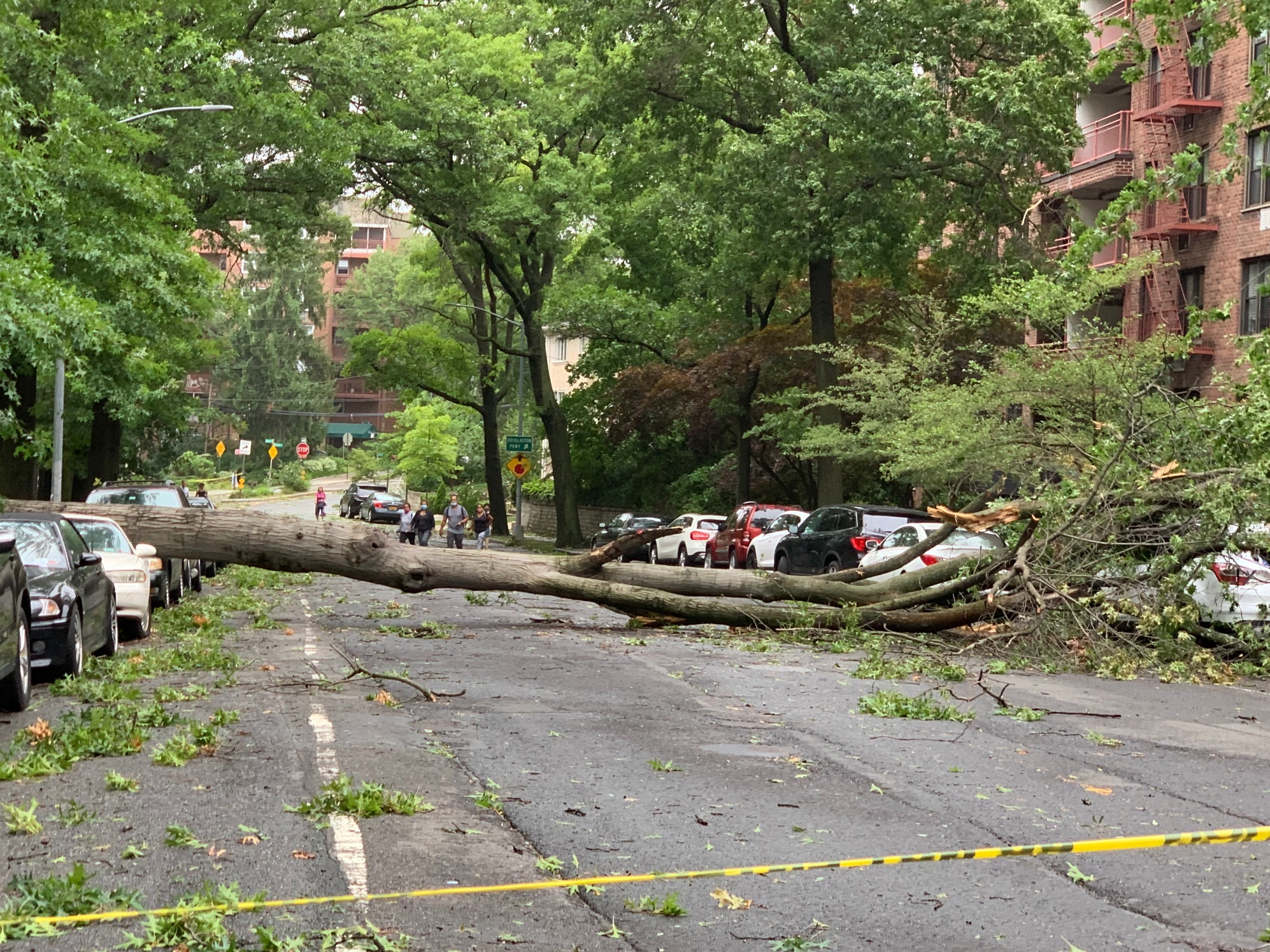 熱帶風暴將大樹颳倒,這樣的場景在紐約市和長島隨處可見。(記者曹健╱攝影)