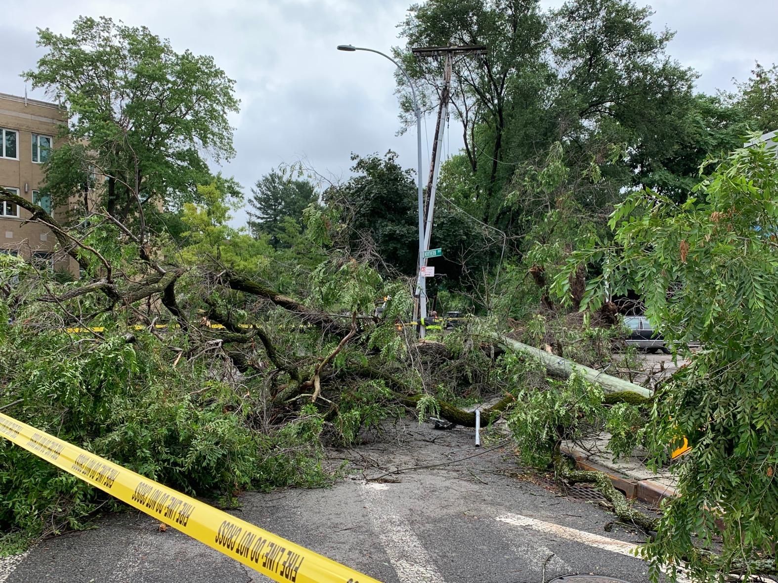 大樹被風暴颳倒,也帶倒了電線桿,造成附近社區停電。(記者曹健╱攝影)