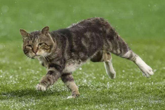 攝影師捕捉貓咪在球場上奔跑的瞬間。(取材自推特)