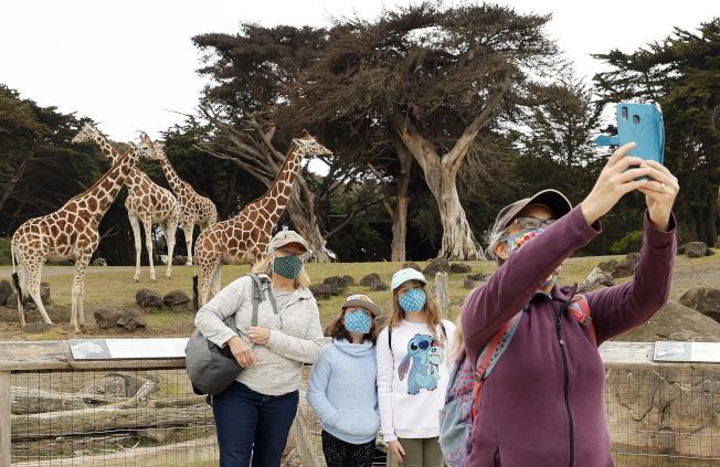舊金山一家人趁著動物園開園,外出踏青,排遣居家避疫的苦悶。(歐新社 )
