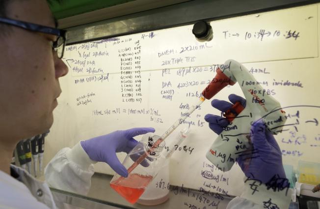 聯邦政府斥資21億元,與法國和英國藥廠簽署生產及購買5億劑新冠疫苗的協議。圖為英國的研究人員在做疫苗試驗。(美聯社)