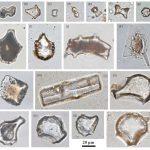 廣西婭懷洞遺址 發現1.6萬年前野生稻