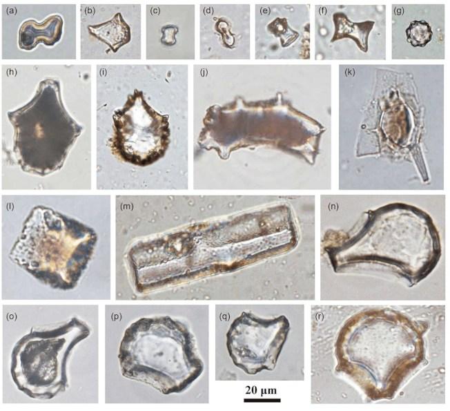 中國科研人員在距今3萬年左右的廣西婭懷洞遺址展開合作研究,發現1.6萬年前的稻屬植矽體。(取自中國科學地球科學網頁engine.scichina.com)
