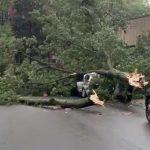 龍捲風刮倒大樹砸汽車 紐約皇后區一人死亡