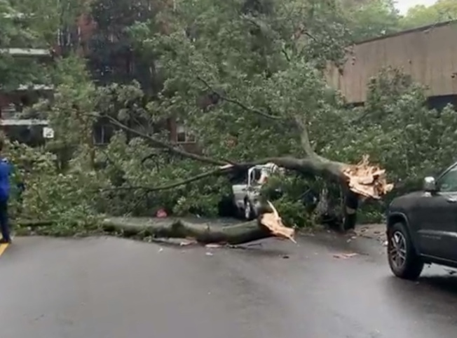 紐約皇后區被龍捲風刮倒的大樹砸在汽車上,造成一人死亡。(取自Citizen App)