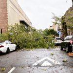 〈圖輯〉伊賽亞斯襲紐約 大樹紛紛倒 砸車攔路