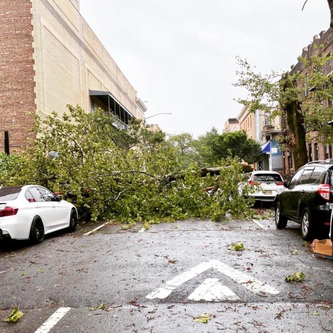 貝瑞吉72街3大道交瑞吉大道一棵大樹被吹倒。(讀者提供)
