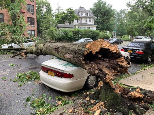 颶風襲擊紐約,下午狂風大作,皇后區道格拉斯頓社區,一棵大樹被從接近根部吹斷,倒塌後橫亙在Church街上,砸爛兩輛私家車,也阻斷了交通。(記者曹健/攝影)