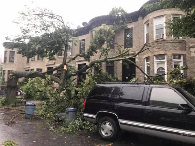 貝瑞吉76街5大道交6大道一棵大樹被吹倒,砸壞一旁停放的汽車。 (讀者提供)