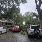 狂風吹倒樹枝砸中轎車 紐約一家五口車內逃脫