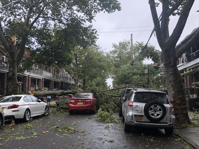 一棵大樹的其中樹枝斷裂倒塌,一輛經過的紅色轎車不幸被砸中。(記者顏潔恩/攝影)