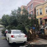 大樹倒塌家門前 日落公園華裔一家困屋內