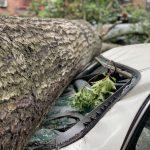 大風吹倒樹 砸壞車和房 索賠路漫漫