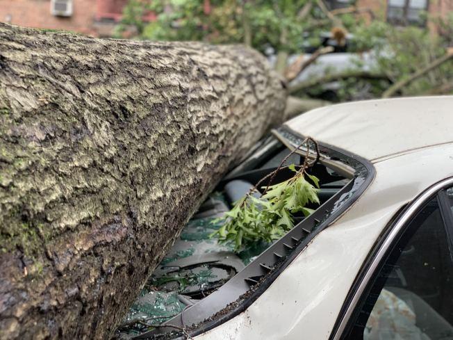 私家車被倒塌的大樹砸壞,有多種索賠渠道。(記者曹健╱攝影)