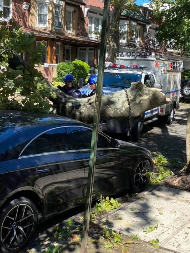 貝瑞吉81街3大道交4大道一棵大樹被風吹倒,砸壞一旁停放的車輛。(讀者提供)