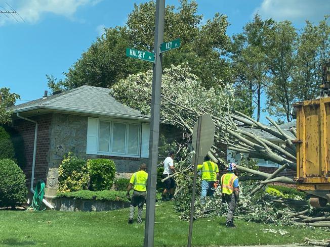 由於熱帶風暴,長島納蘇郡1000棵大樹被吹倒,朱崴家附近的社區有多棵樹木被吹倒。(朱崴提供)