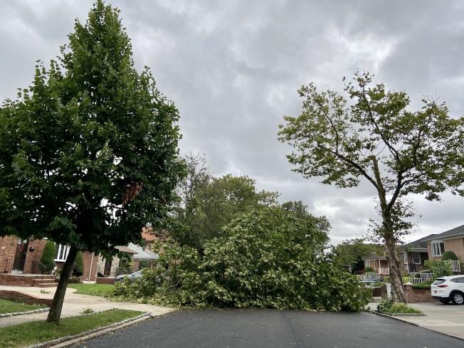 全市一些街道因倒樹和掉落的大樹枝無法通行。(記者朱蕾/攝影)