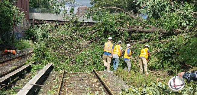長島鐵路軌道沿線有數百棵樹和十餘根電線桿被颳倒。(MTA提供)