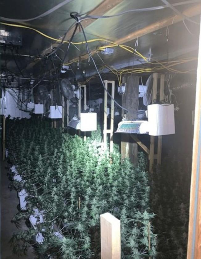 黃斌麻州的住所內種有市值300萬元的大麻。(麻州警方提供)
