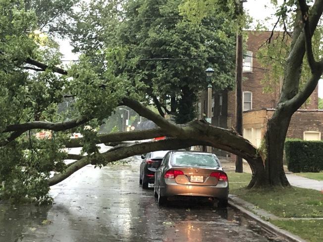 美國中西部10日受到挾帶颶風威力強風的風暴侵襲。圖為芝加哥地區路樹倒塌。美聯社