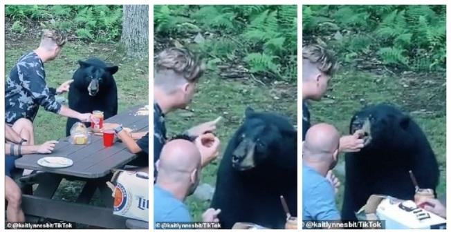 拍下奇遇的TikTok用戶奈斯比表示,正當親友享用零食與啤酒時,這頭黑熊突然從周圍的樹叢冒出來找吃的。他們餵食舉動不只犯法,也引來強烈批評。畫面翻攝:MAILONLINE