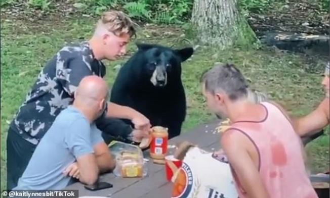 美國有一家人到馬里蘭州一處偏遠林地度假和野餐時,遇到閒晃的黑熊跑來蹭飯,還耐心等待人類幫牠準備花生醬三明治。畫面翻攝:MAILONLINE