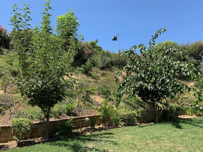 營造花園一樣的園藝效果。(記者張宏/攝影)