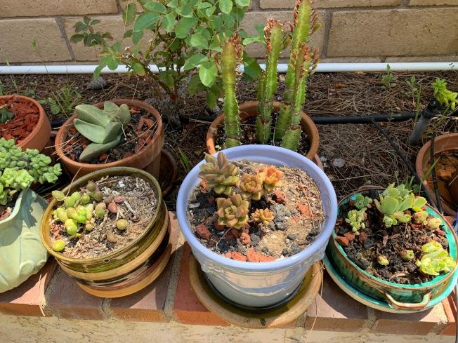多肉植物種類繁多。(記者張宏/攝影)