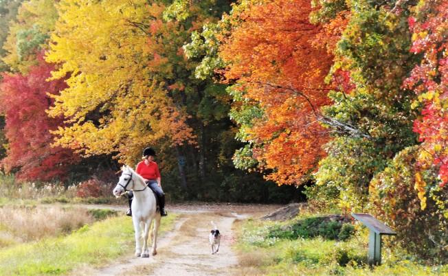 AccuWeather 預測今年秋葉季將遲到兩周。(記者唐嘉麗/攝影)