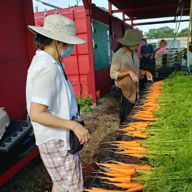 日向農場推廣東亞文化及城市有機栽種。(取自Routes2farm.org)