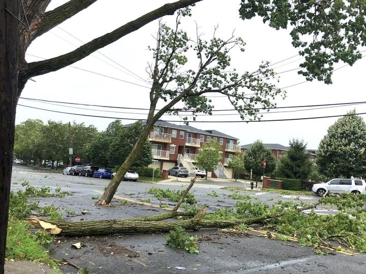 熱帶風暴伊賽亞斯襲紐約,皇后區大學點附近大量樹木倒在路中間。(楊雪梨提供)