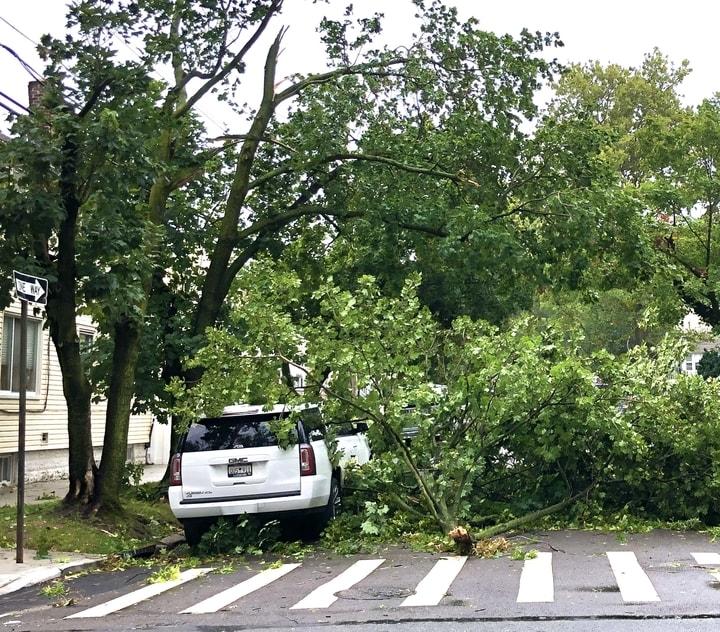 法拉盛友聯街附近因4日熱帶風暴伊賽亞斯,樹木倒在街道上。(楊雪梨提供)