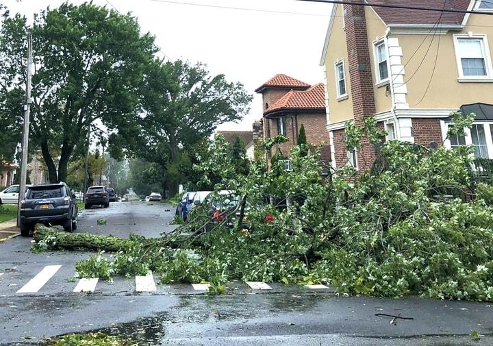熱帶風暴伊賽亞斯襲紐約,皇后區大學點附近大量樹木被吹倒。(楊雪梨提供)