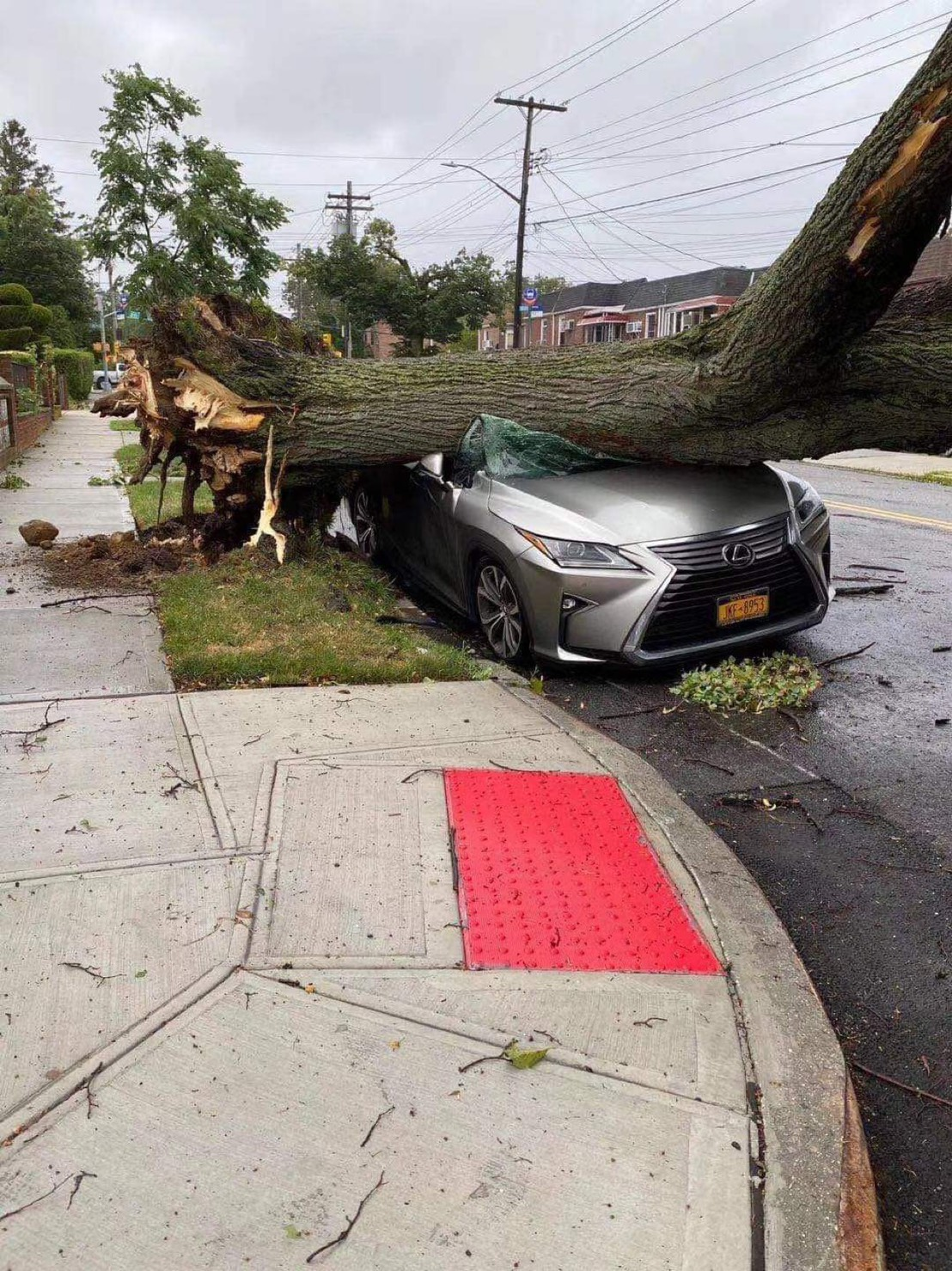 皇后區貝賽附近,大樹被強風吹倒,砸中路邊轎車。(Will Cheung提供)