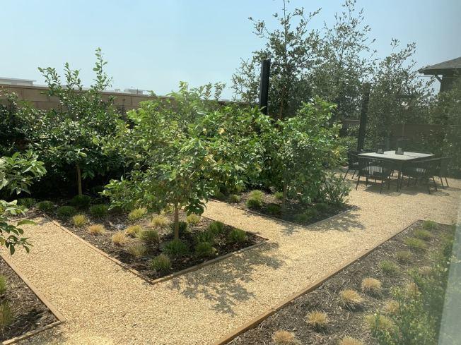 私家後院,裁種養眼綠色植物。(記者啟鉻/攝影)