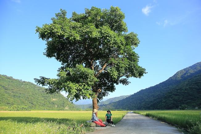 玉里版的金城武樹,乃是當地人的私房景點。(記者陳睿中/攝影)