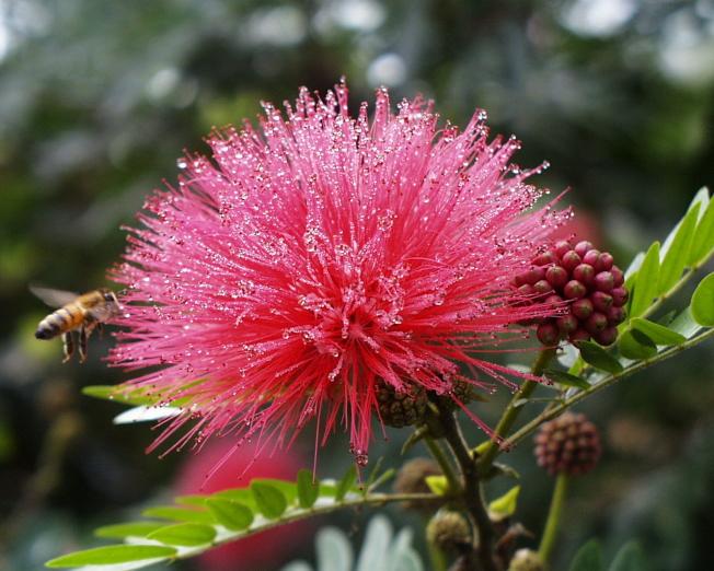 盧家花園盛開的花樹之一。(取自臉書)