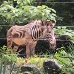 城市傳真 │ 輕鬆「疫」下 遊國家動物園