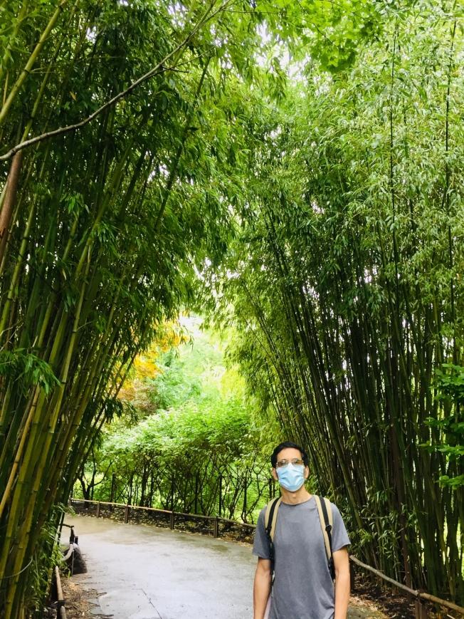 「亞洲小徑」兩邊青翠碧綠的竹子夾道。(圖:作者提供)