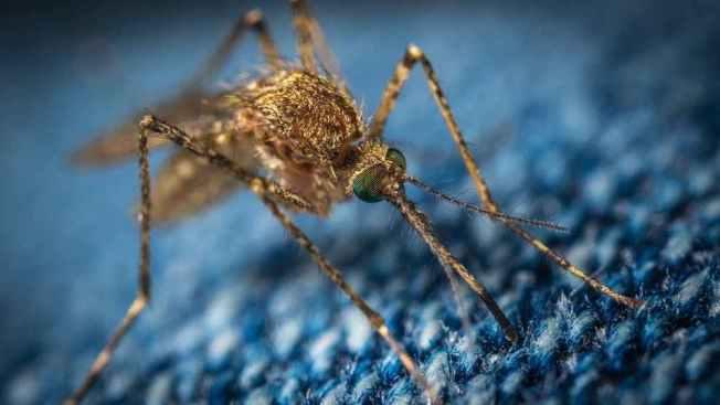 柏加大啟動的亞洲和美國蟲媒病毒研究和加強監測中心,希望研究新興或再發傳染病。(取自柏加大官網)