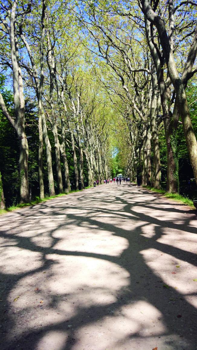 通往昂布瓦斯城堡的林蔭道。(爾雅.圖片提供)