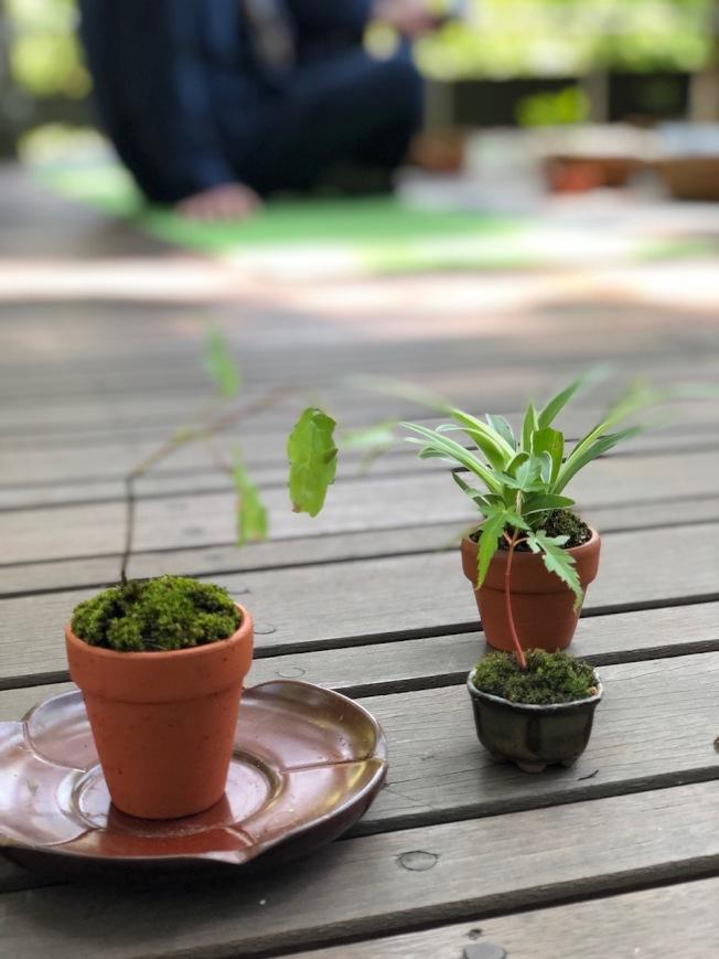非常療癒的「草花散策」最後會協助大家製作「迷你盆栽」,把美好記憶帶回家。(錢欽青╱攝影)